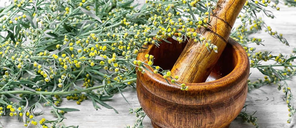 Hildegarda piołun zioła